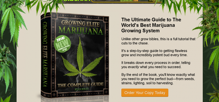 item86 700x328 - How to grow weed